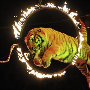 Цирки Фершампенуаза