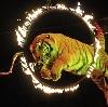 Цирки в Фершампенуазе